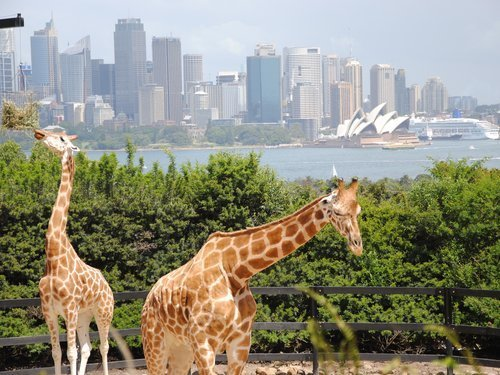 Image result for taronga zoo